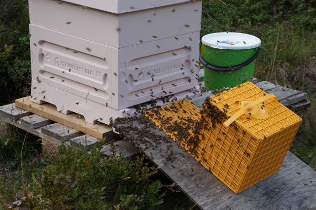 mehiläisten marssi