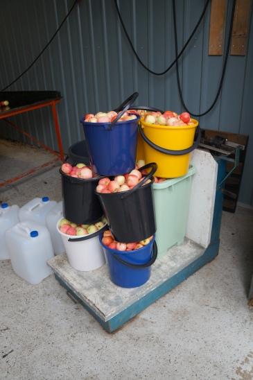 Omenat puntarilla
